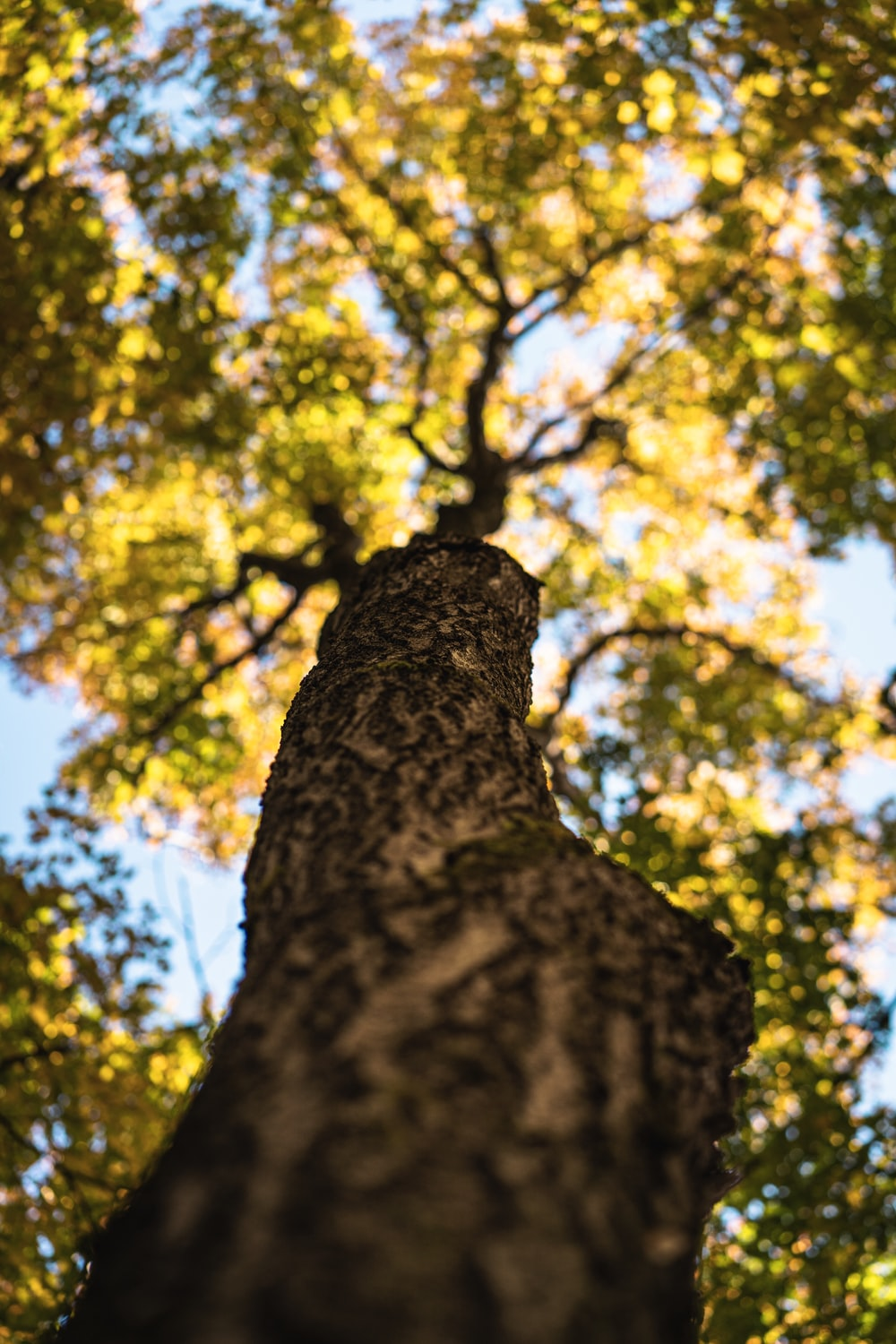 worm's-eye view photography of tree