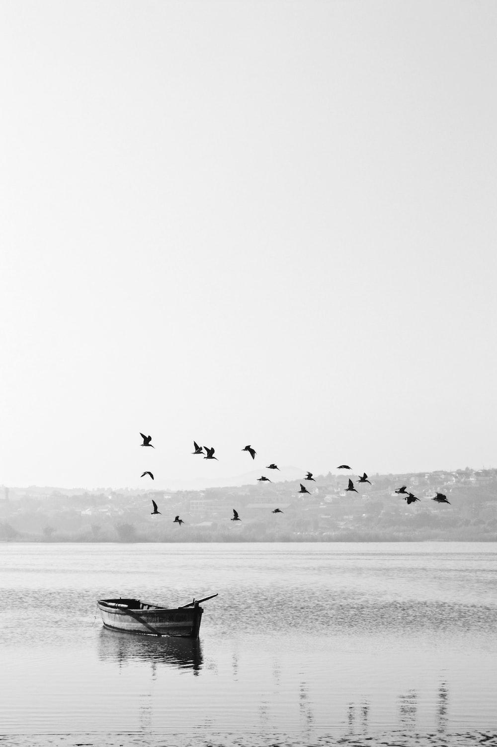 birds flying over boat