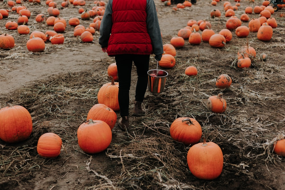 person surrounded with orange pumpkins
