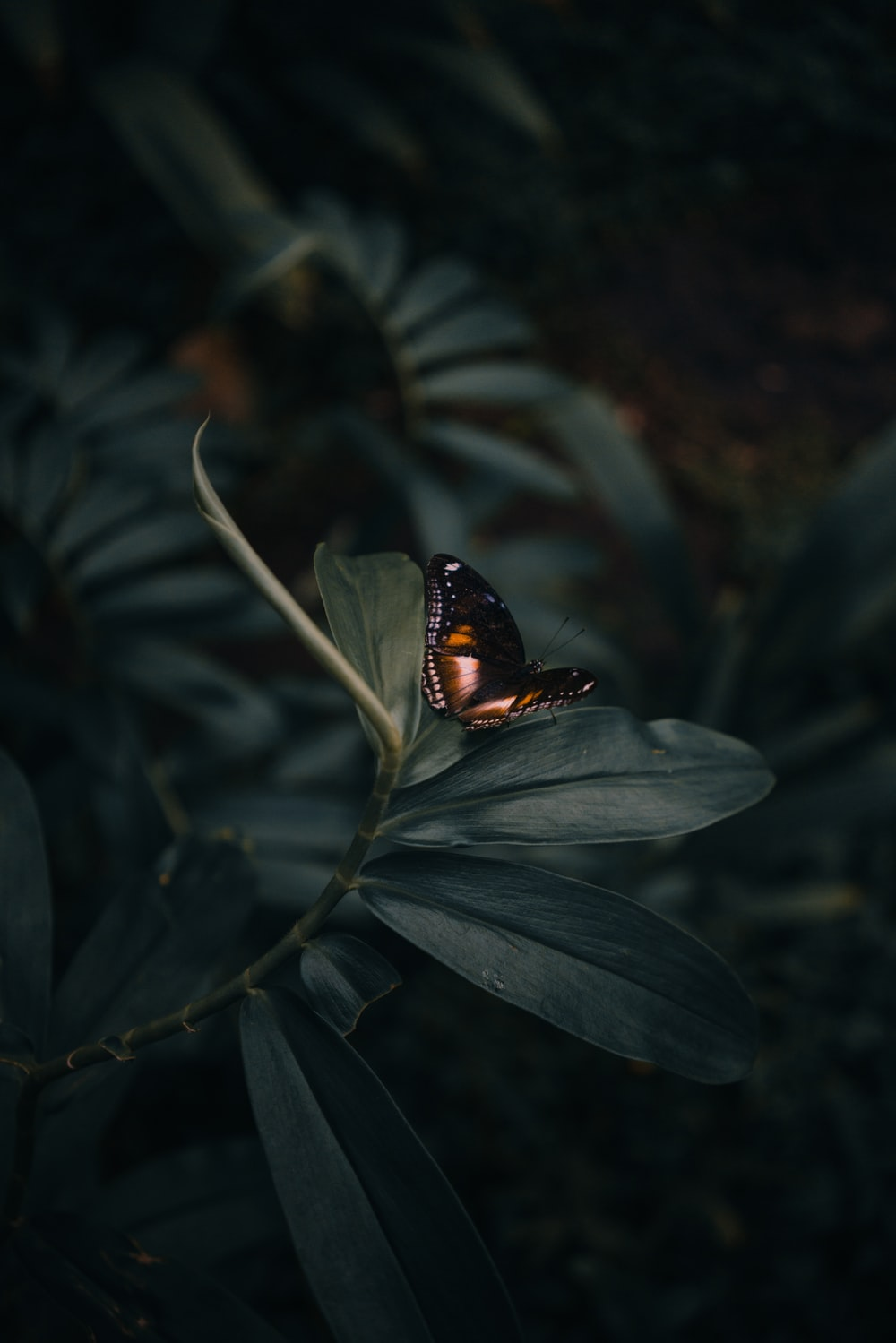 butterfly perching on leaves