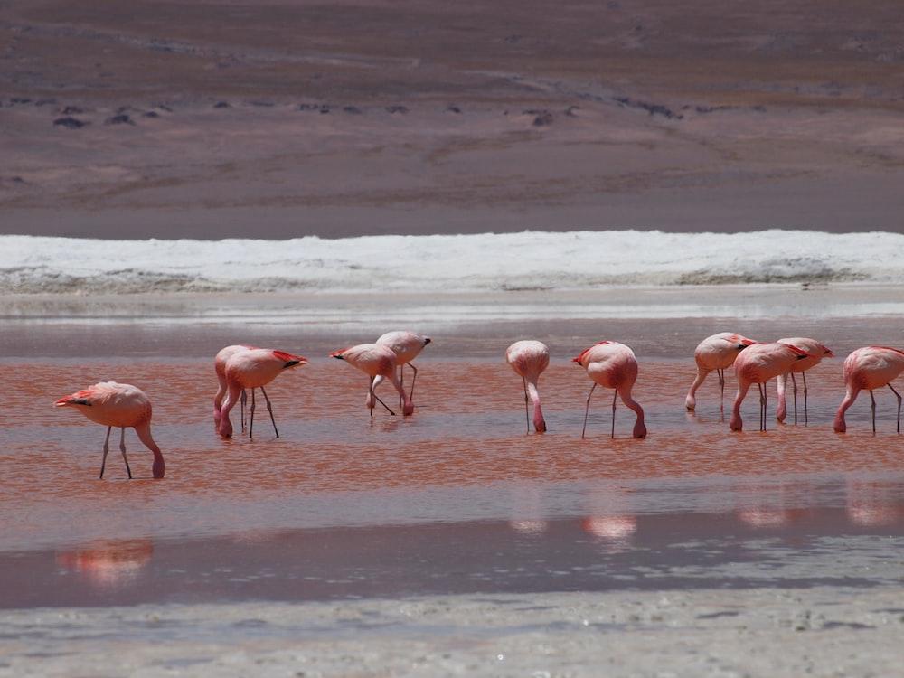 flock of flamingo birds
