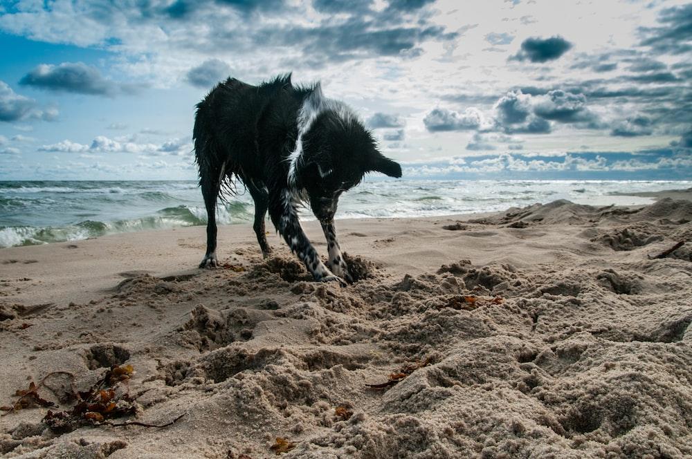 dog on seashore