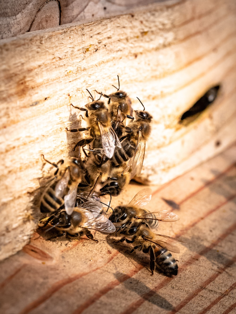 group of black and yellow bees