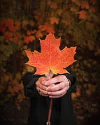 Turning  Leaf leaves stories