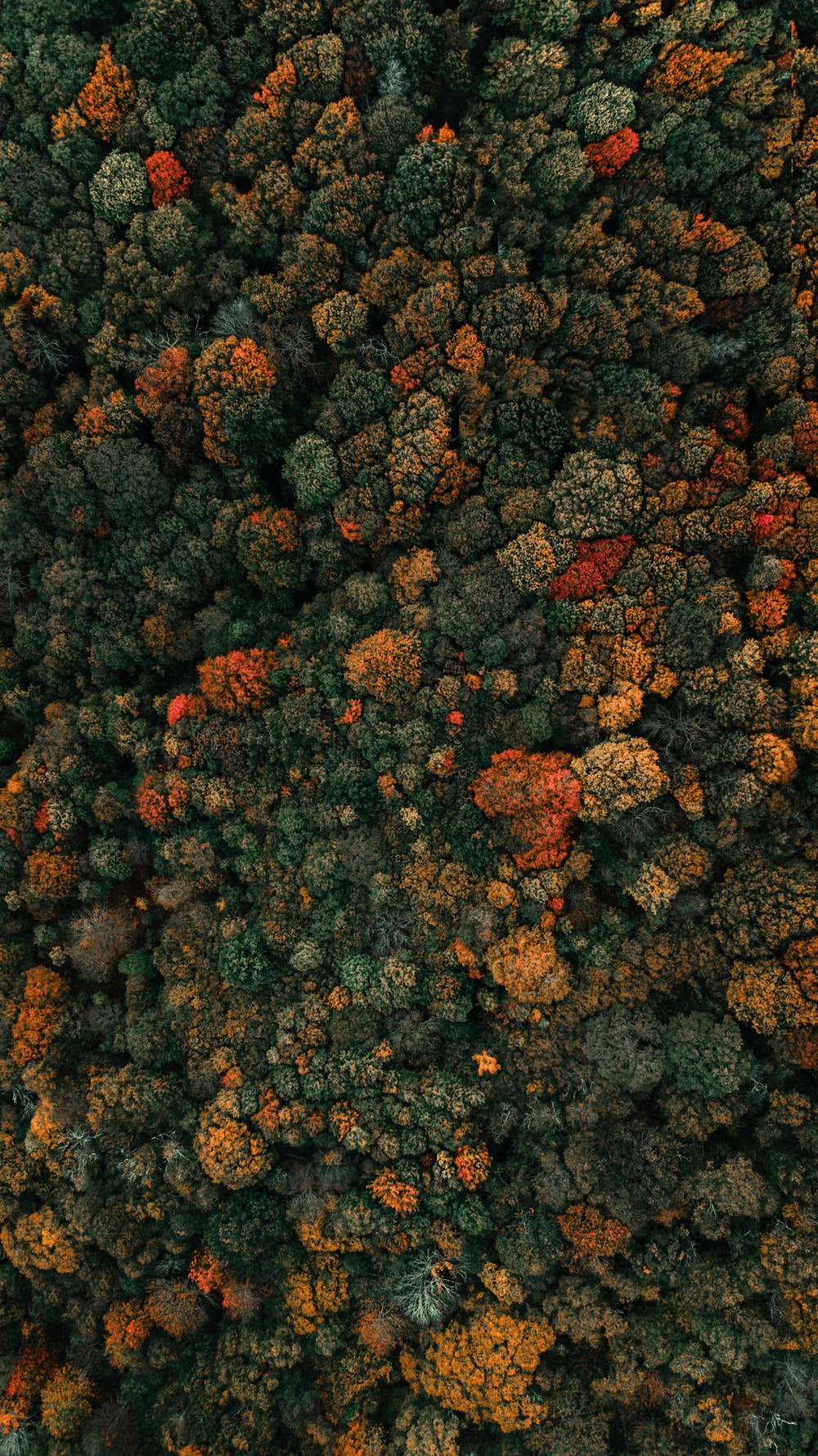 aerial photography of green-leafed trees
