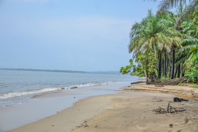 green coconut palm trees gabon zoom background