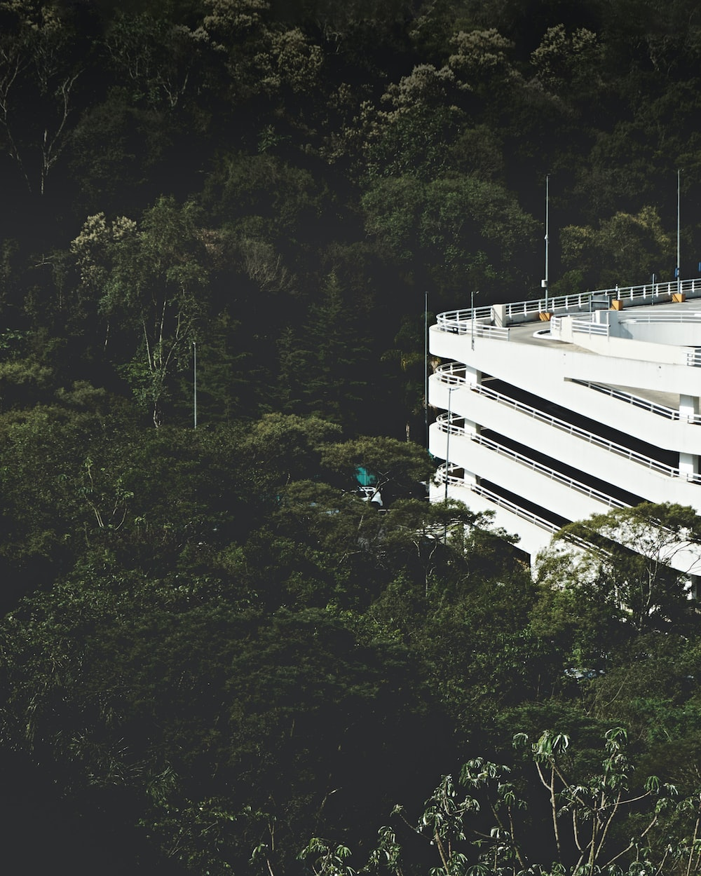 building near forest