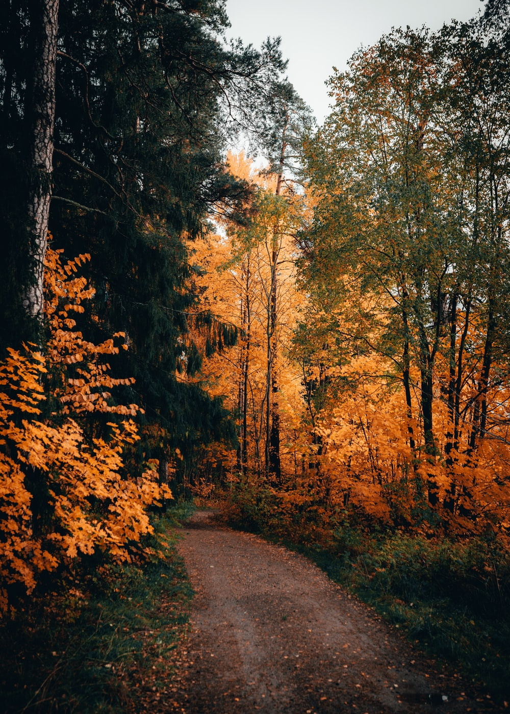 forest pathway scenery