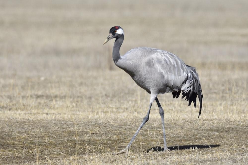 silver long-legged bird