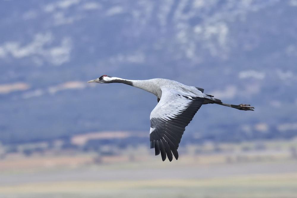 grey and black bird on mid air