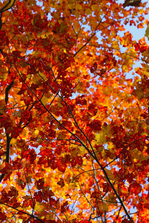 closeup photo of tree