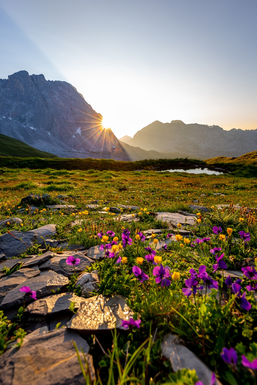 purple petaled flowers near mountain