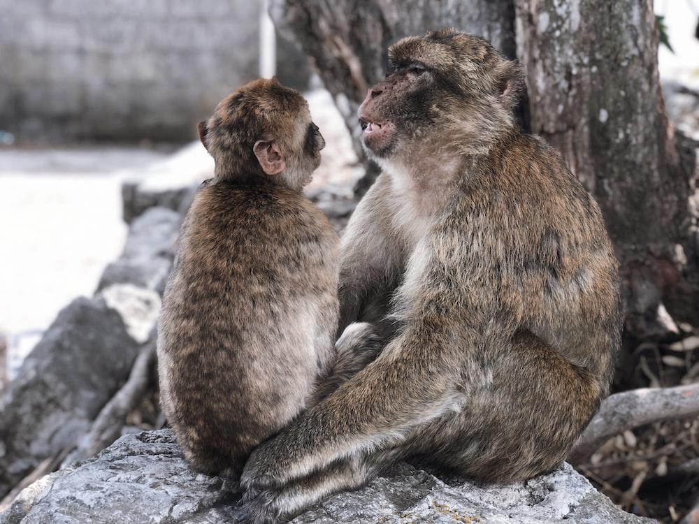 closeup photo of monkeys near tree