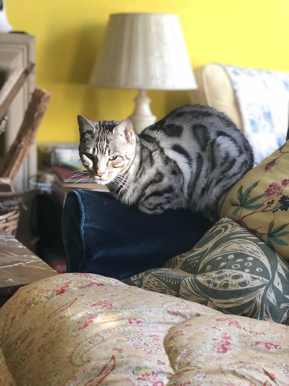 silver bulls-eye cat