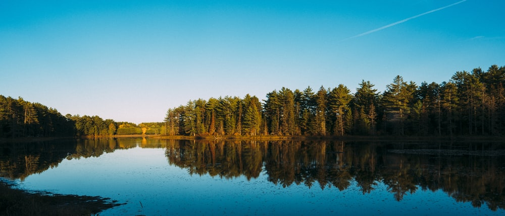 forest and body of water during day