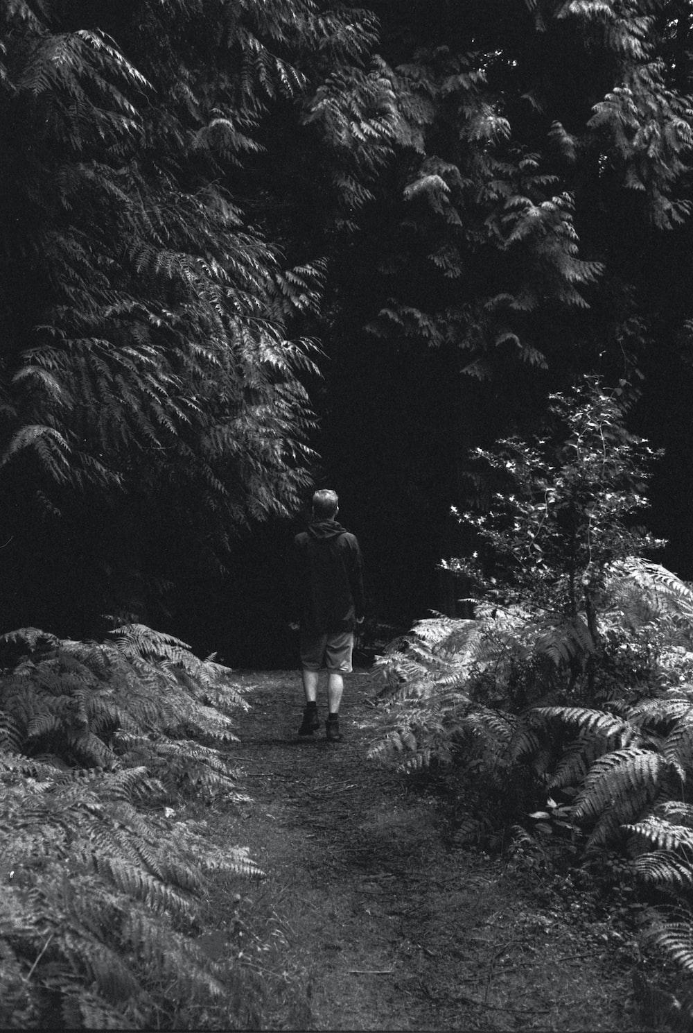 man walking on dirt road between plants