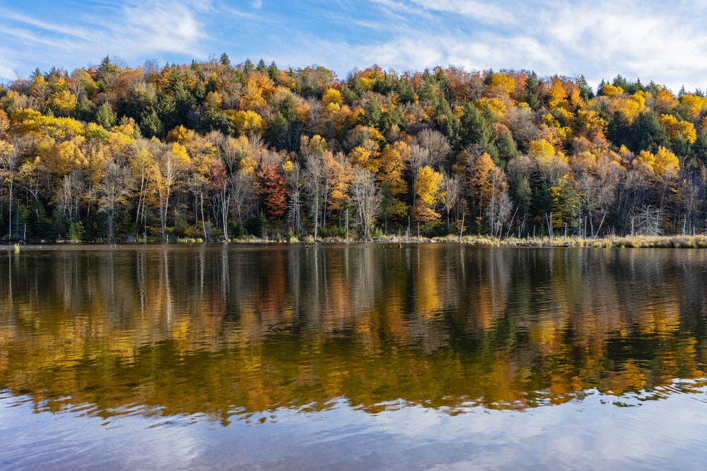 green and yellow trees beside body of water