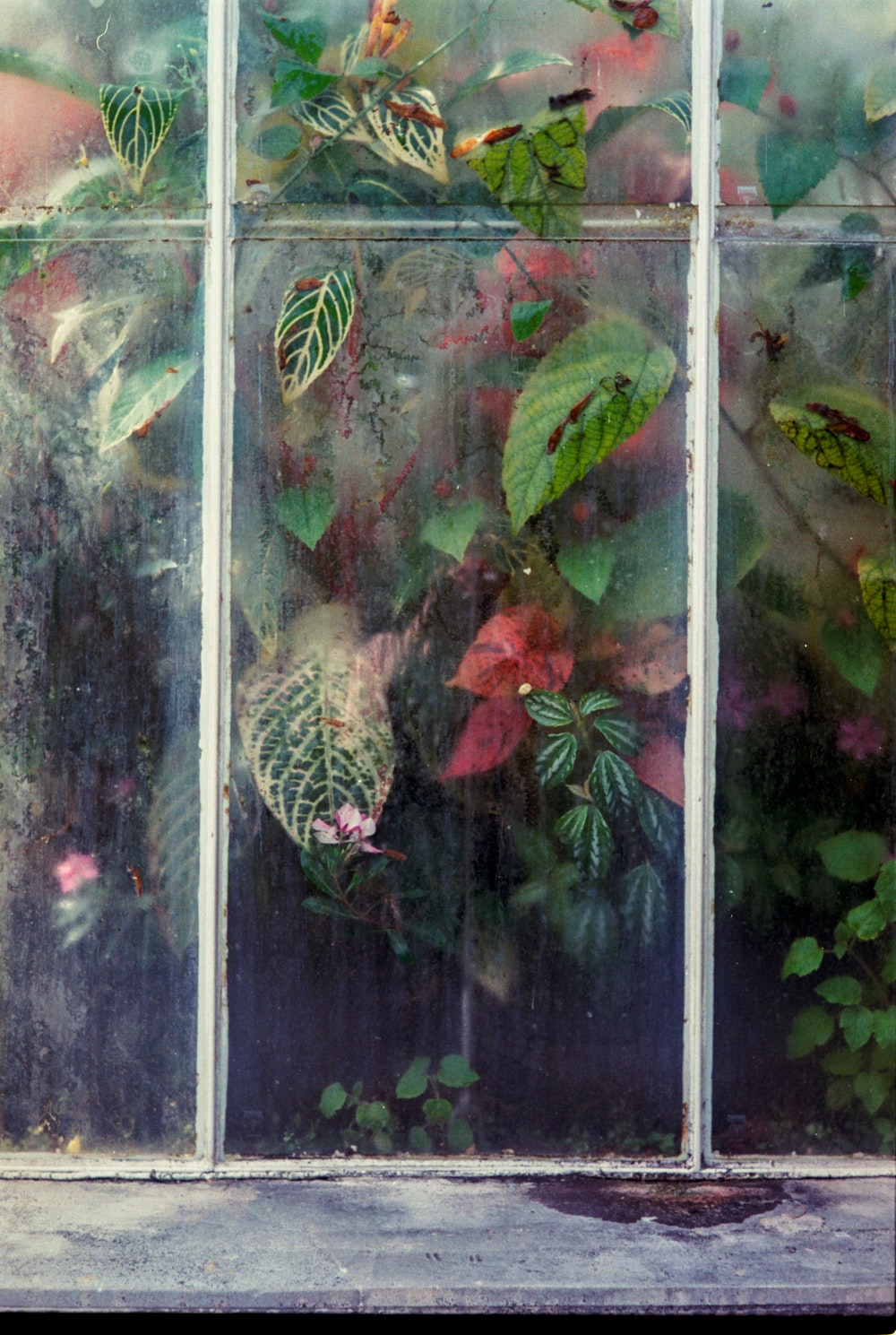 green-leafed plant behind a clear glass window