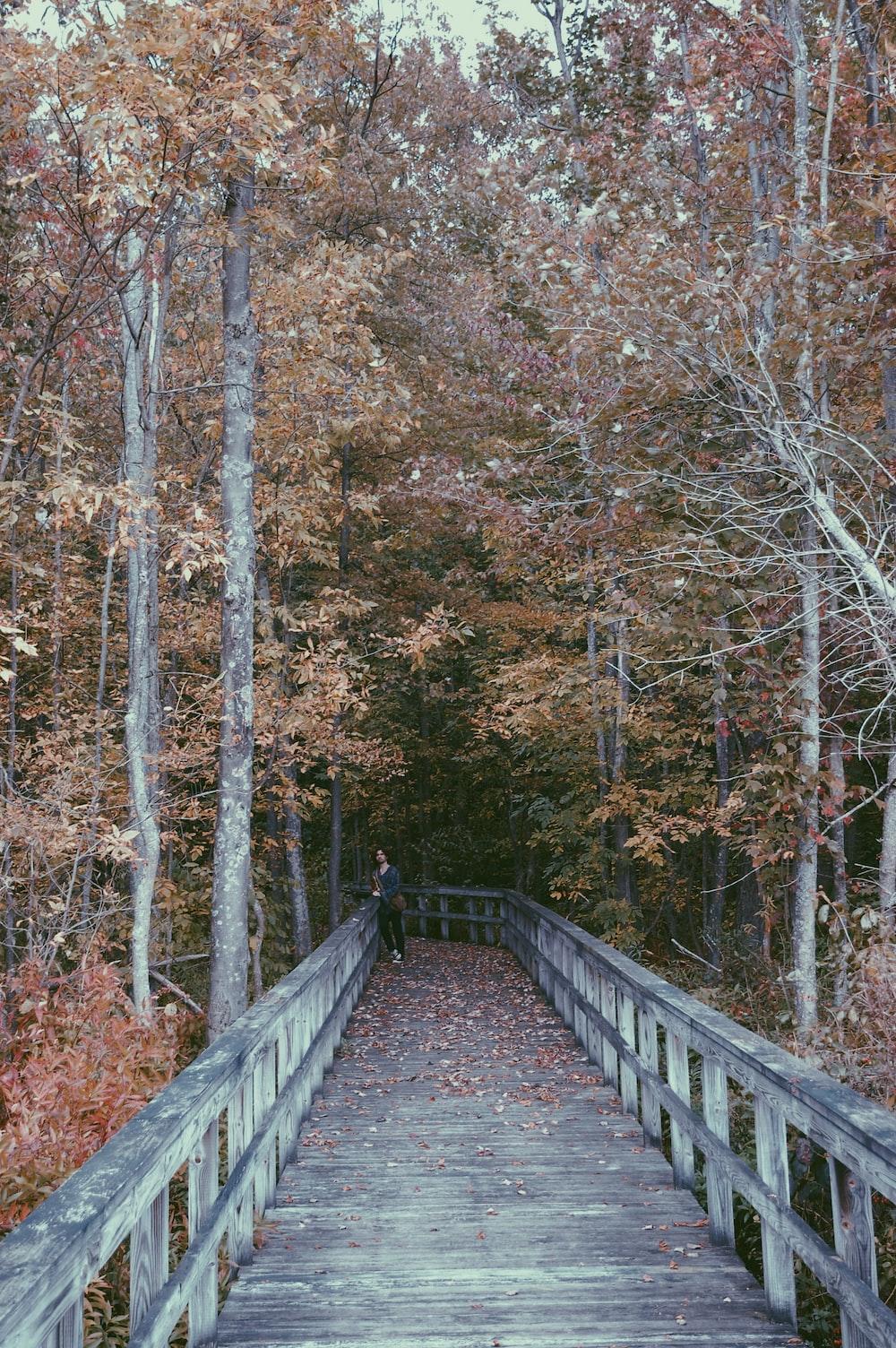 bridge beside trees