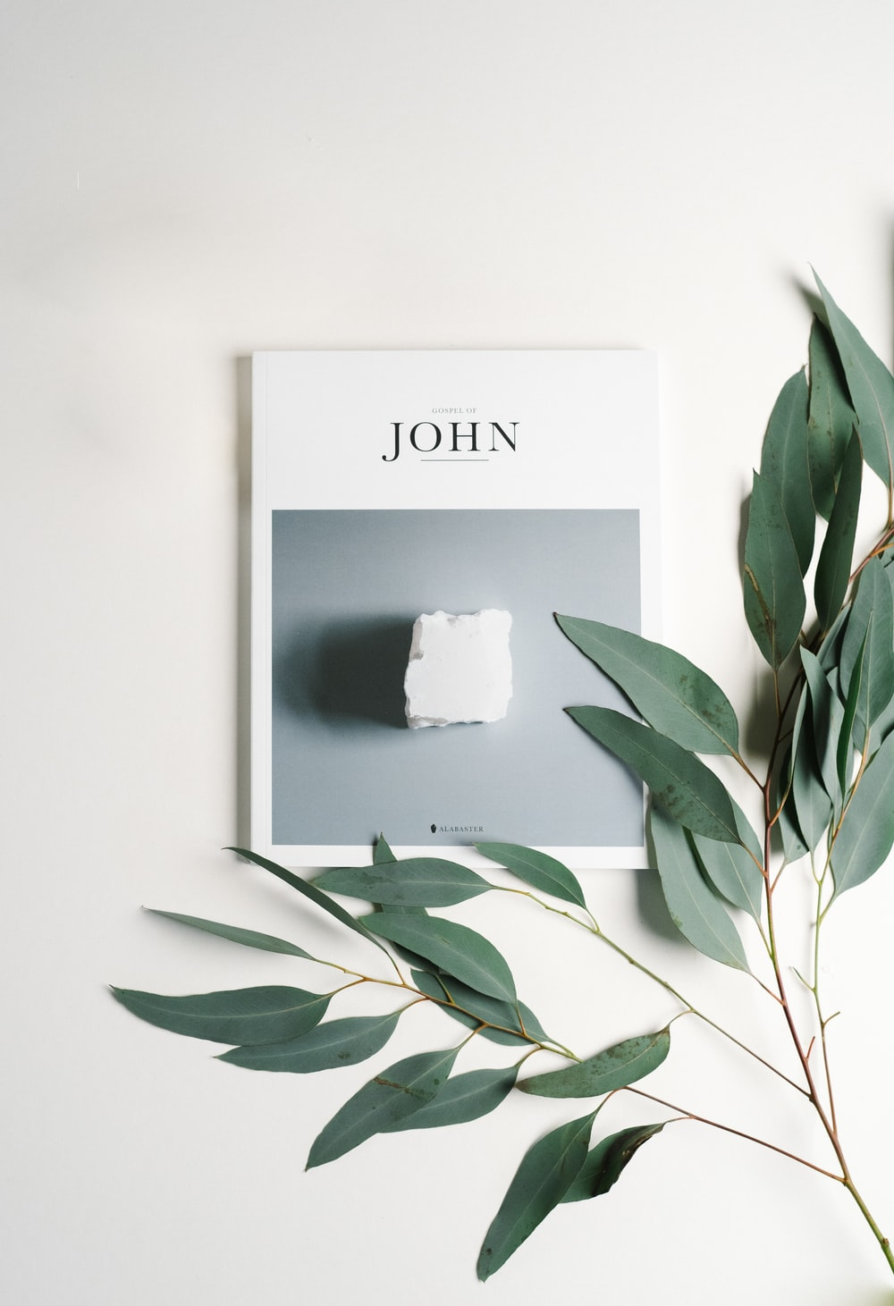 John card and green-leafed plant