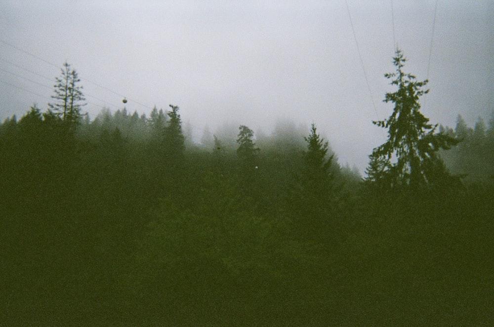 pine trees during daytime