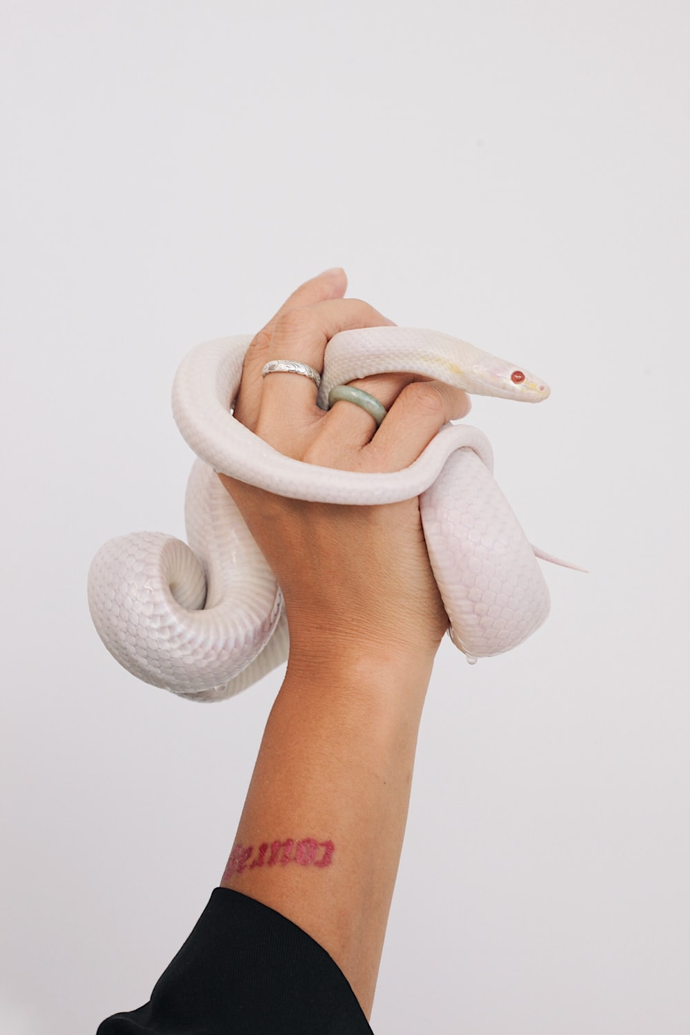 albino snake wrapped on person's hand