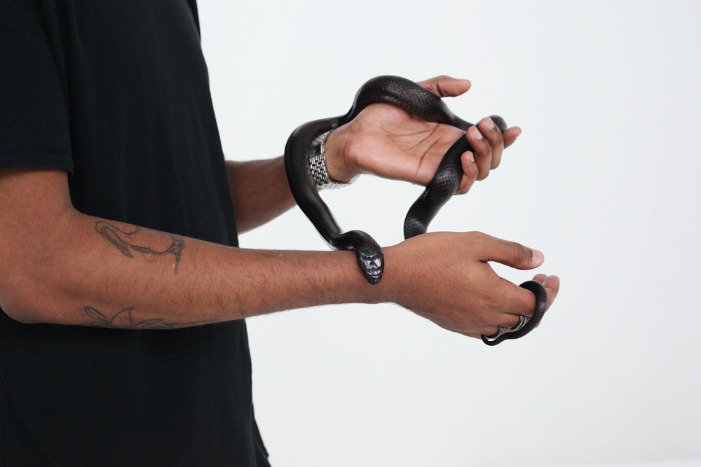 person holds black snake