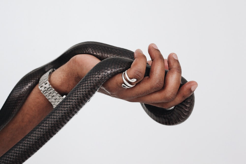 black leather snake