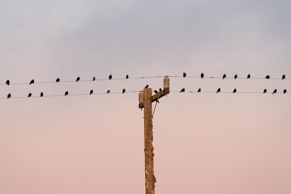 flight of birds on wire