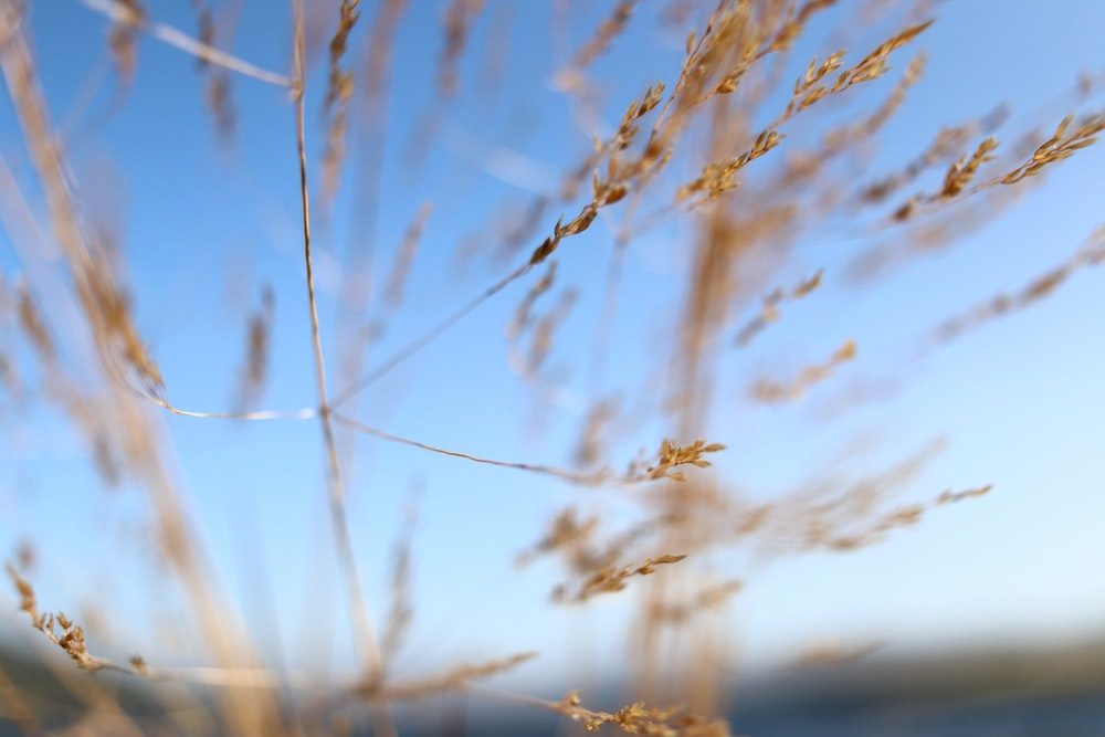 macro photography of brown wheat during daytime