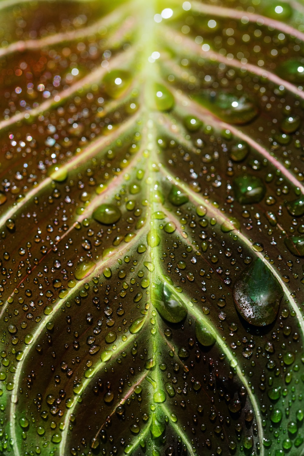 close-up photography of water dews on leaf