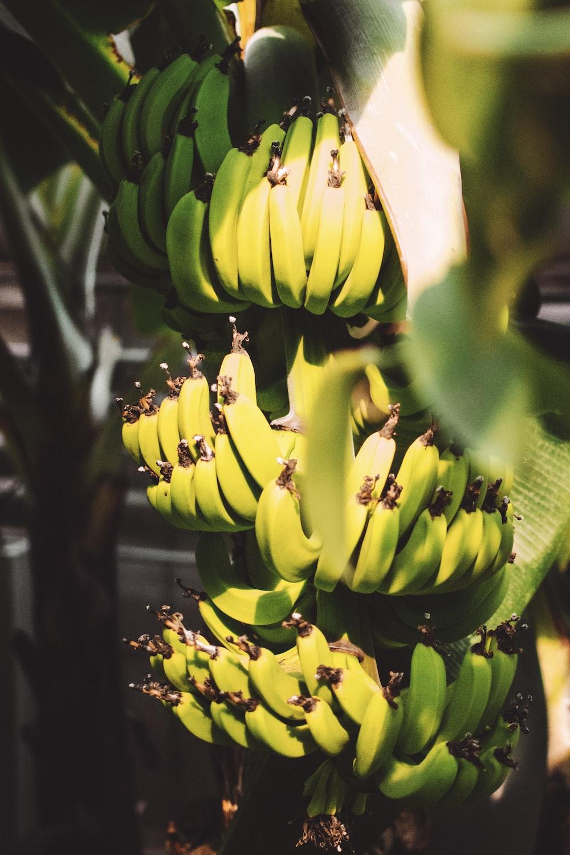 banana fruit close up photography