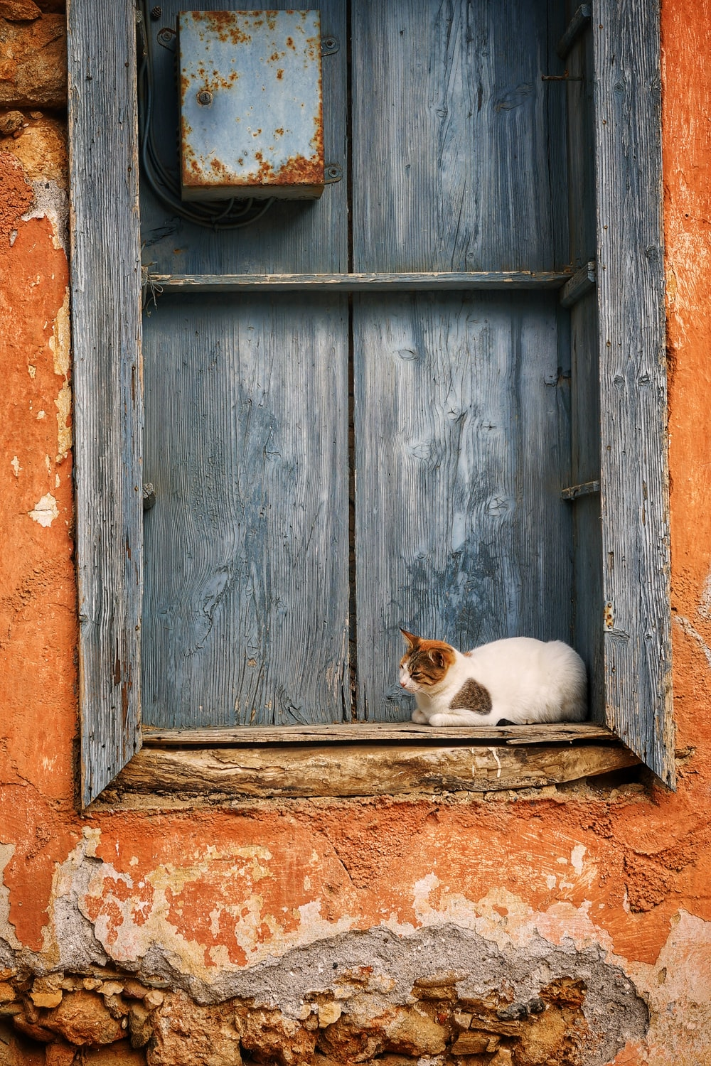 white cat sitting front of wooden window