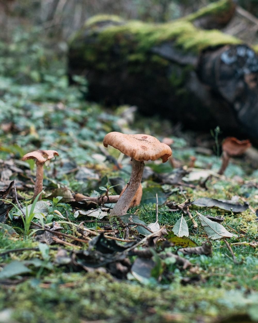brown and white mushroom