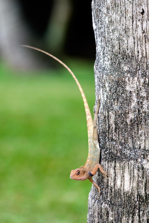 beige lizard on tree