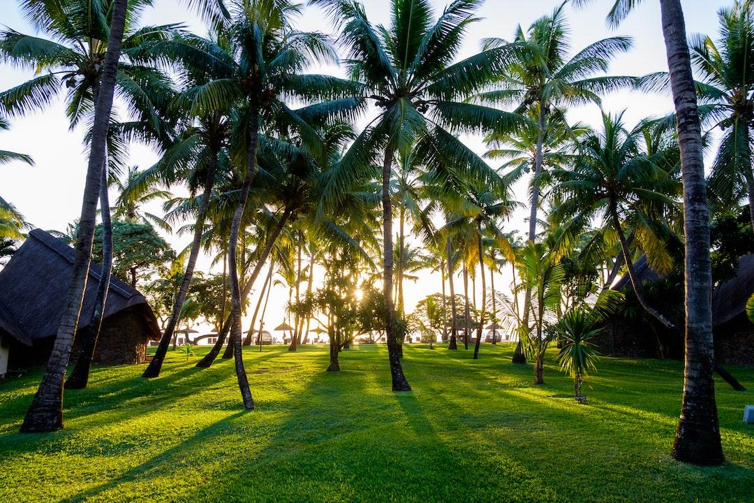 Palm trees, Mauritius
