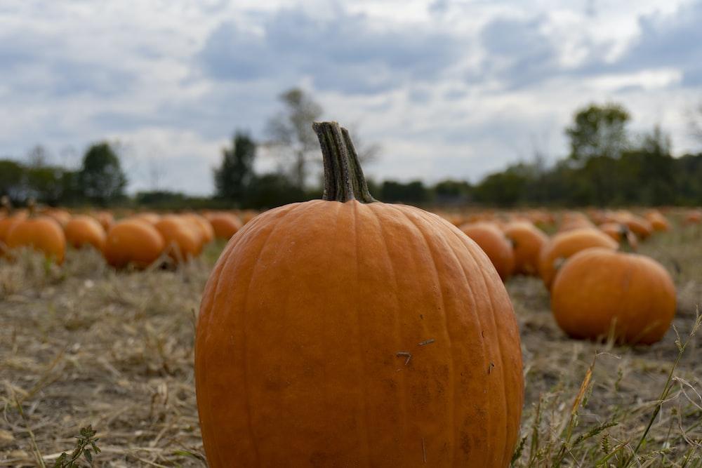 orange pumpkins close-up photography