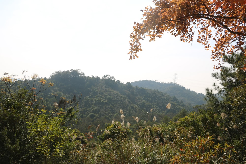 trees and plants on mountain