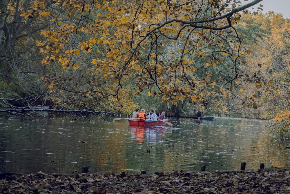 people riding boat floating on body of water near trees during day