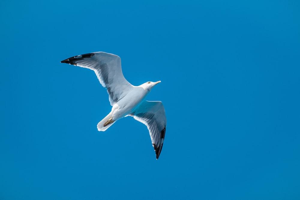 white seagull photo