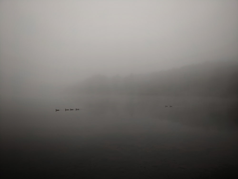 grayscale photography of ducks on body of water