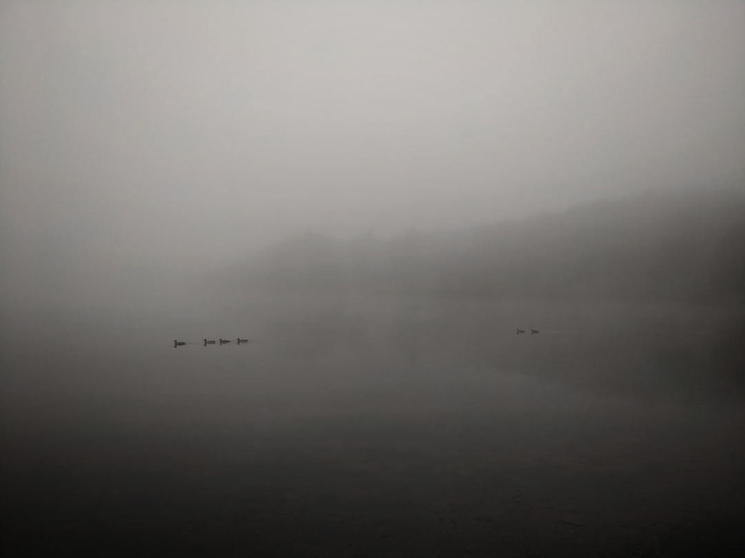 A thick mist over the ponds as the ducks swim by, Frensham, UK