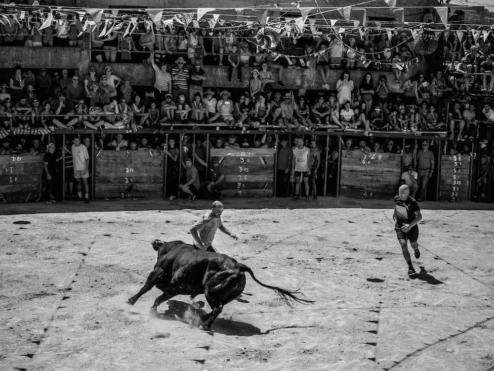 grayscale photography of two men bullfighting