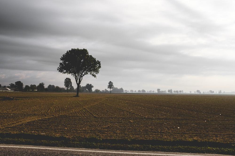 brown land field
