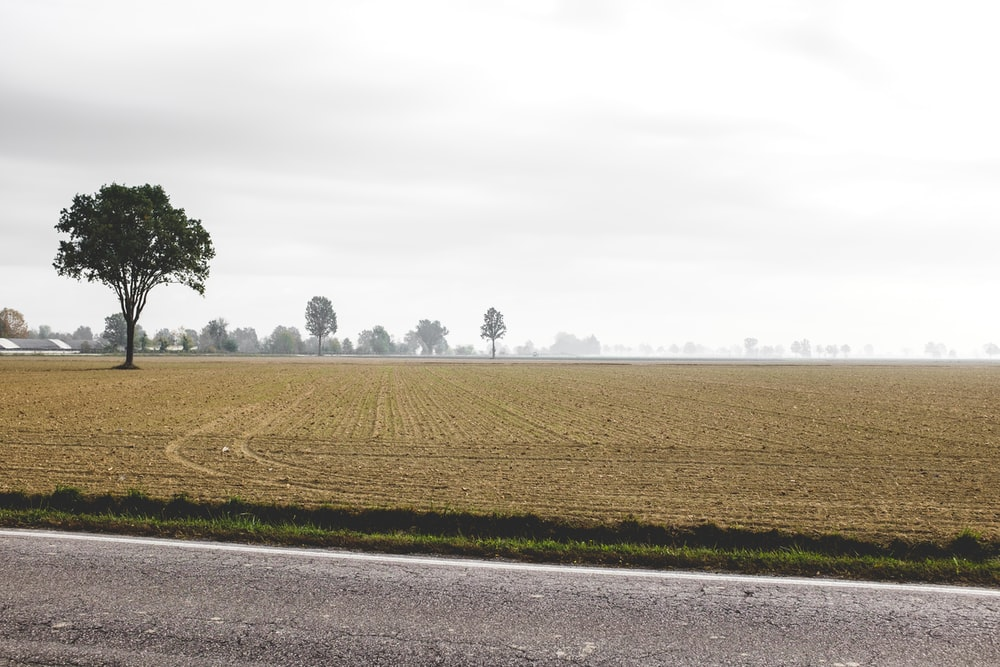 brown field and trees during daytime