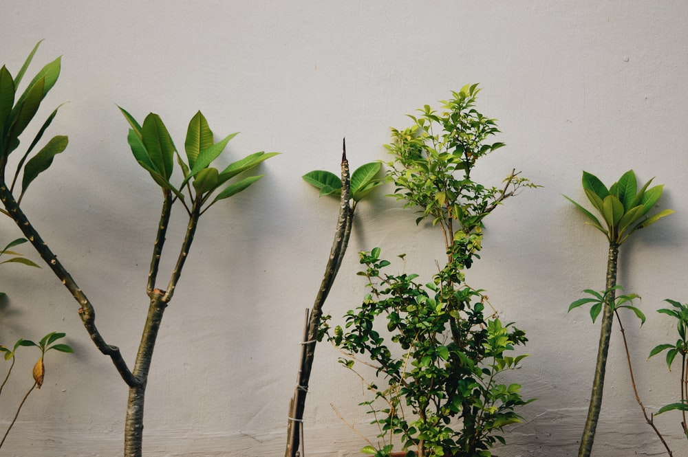 green-leafed plants