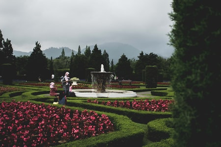 Fountain Grass in Gardens