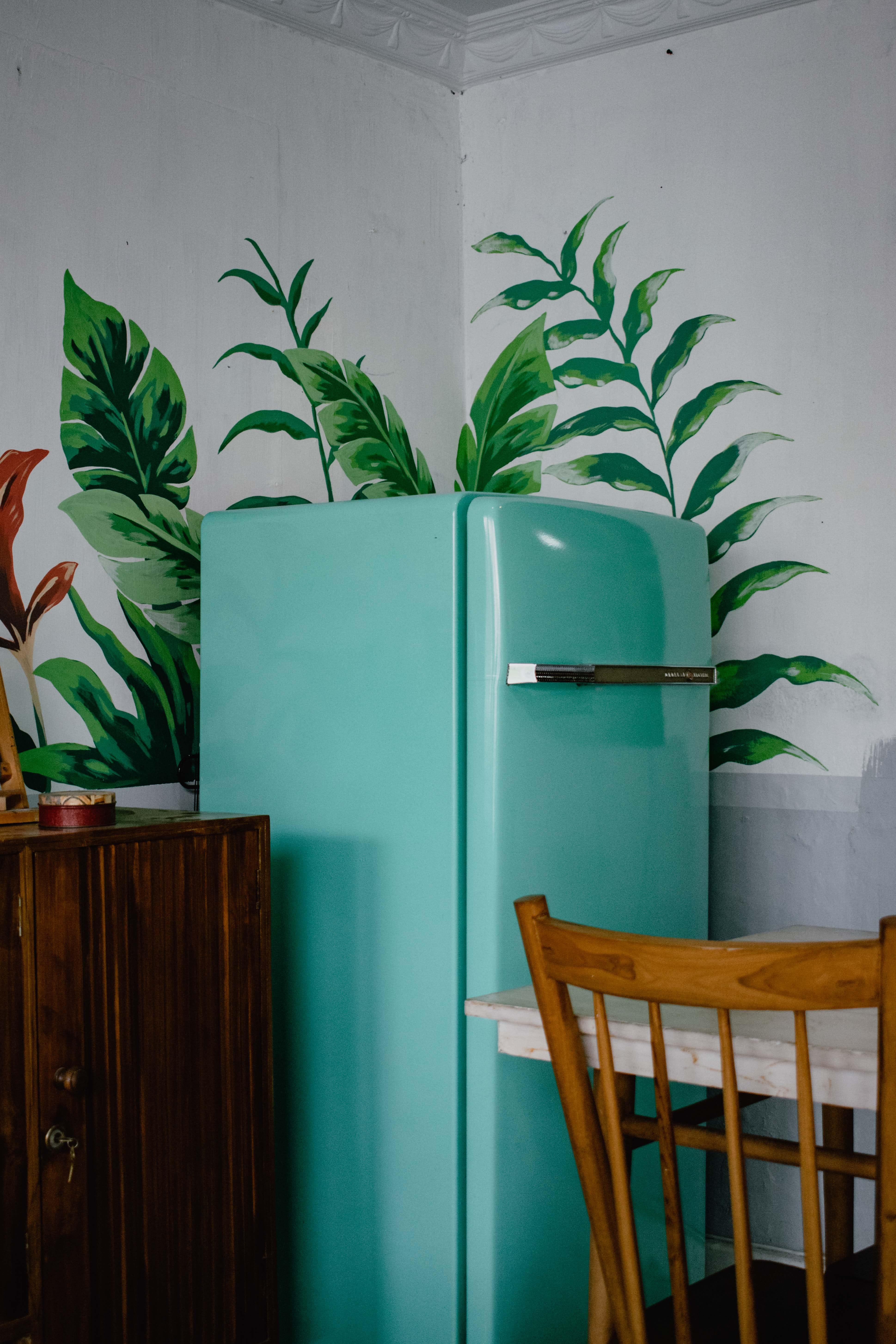 blue refrigerator beside green-leafed plant