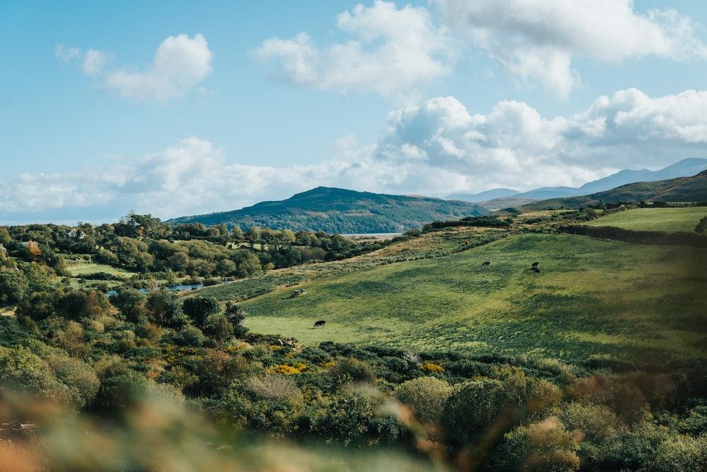 green field under bleu sky