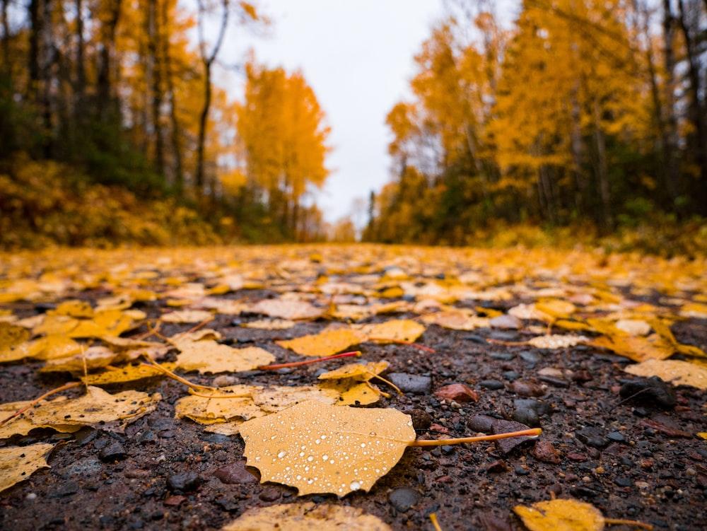 orange maple leaves on road during daytime